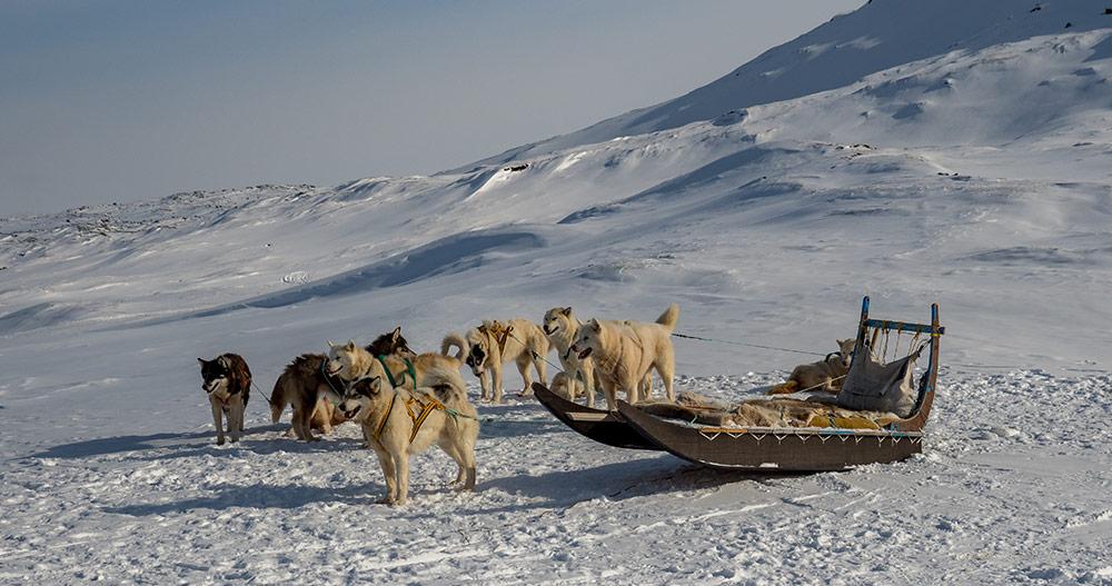 ilulissat-chiens-traineau