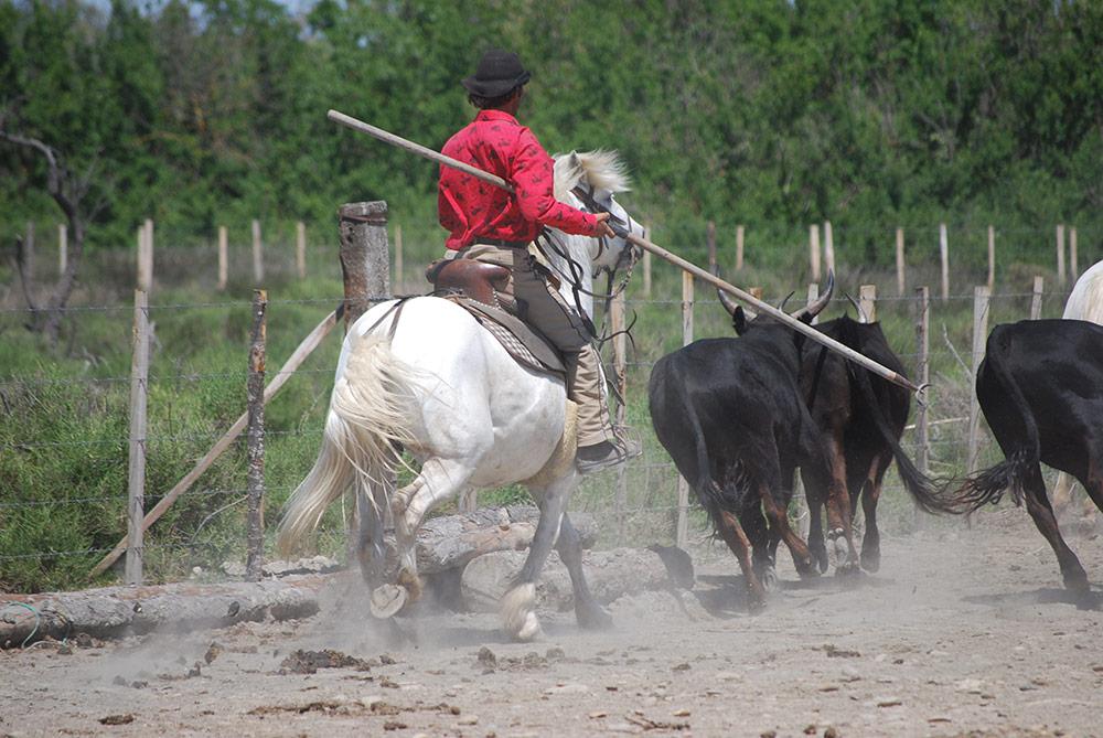 La manade camarguaise